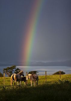 This picture clearly shows that horse are the pot of gold at the end of the rainbow Rainbow Magic, Rainbow Sky, Love Rainbow, Over The Rainbow, Rainbow Promise, Beautiful Sky, Beautiful Horses, Beautiful World, Beautiful Places