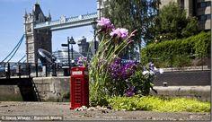 Gardener Steve Wheen turns potholes into pretty small garden scenes-miniature flowerbeds