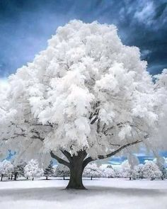 Cool Photos, Interesting Photos, Leaves, Clouds, Snow, Wallpaper, Winter, Outdoor, Trees