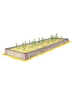 "Grow Asparagus Anywhere in Our Exclusive Raised Bed/ $110  Could build this....           Grow delicious, fresh asparagus in any sunny spot! This long narrow bed bed with a generous 7"" depth is the ideal size for asparagus and makes tending the plants much easier.          Attractive, long-lasting raised bed fits five to six asparagus crowns   Sturdy and rustproof aluminum corners have an attractive copper finish    Cedar is naturally rot-resistant and chemical-free"