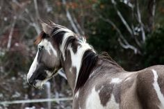 View topic - Brumby Horses. New and Open! 1. How It All Began ...