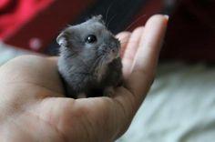 Cutie pie hamster