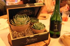 succulent centerpiece in old cigar box $35.00