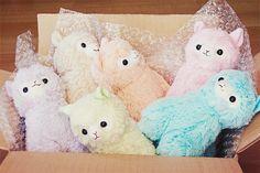 Arco iris de alpacas,las quiero todas.