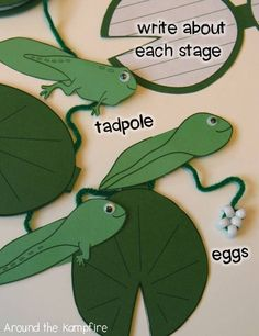Frog life cycle writing craft. Students write about each stage of the life cycle inside the small lily pads! All of the pieces tuck inside a lily pad pocket.