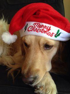 Merry Xmas!#caesar