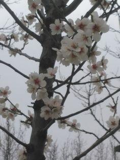 Empieza la primavera