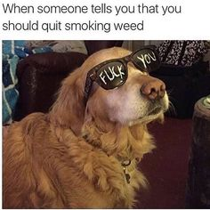 Excellent memes to make your day better! And even more funny work memes to help fight off those Monday Blues. Reaction Pictures, Funny Pictures, Funny Images, Friday Pictures, She Wolf, Jackson, Kawaii, Dankest Memes, Weed Memes