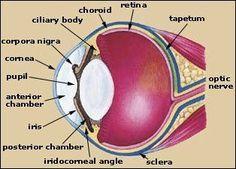 A Horses Eye.