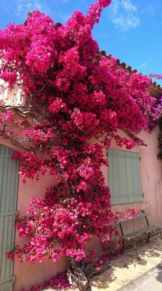 Bougainvilleas in the South of France – Modern Bougainvillea, Beautiful Flowers, Beautiful Places, Large Flower Arrangements, Wild Flower Meadow, Planting Roses, Flower Aesthetic, South Of France, Travel Aesthetic