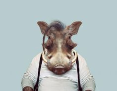 This Artist Spent 3 Years Dressing Zoo Animals Like Humans And The Clothes Fit Unbelievably Well !!!!