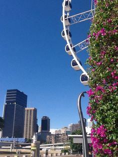 Brisbane Sky line with the wheel.
