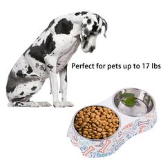KLASKWARE Dog Bowls Double Stainless Steel Cat Dishes with NonSkid Rubber Feet Pet Food Water Feeding Station for Dogs Cats Puppies and Kittens Medium Bone ** Want extra info? Click on the picture. (This is an affiliate link). Cat Feeding, Pet Food, Dog Bowls, Dog Food Recipes, Dog Cat, Kittens, Stainless Steel, Puppies, Dishes