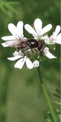 American Nurseryman Magazine - Horticulture Magazine and Horticulture Books - Nurseryscaping for Pest Control - February, 2014 - FEATURES
