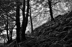 El bosque negro de Isengar