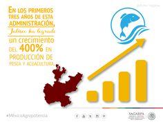 En los primeros tres años de esta administración Jalisco ha logrado un crecimiento del 400% en producción de pesca y acuacultura. SAGARPA SAGARPAMX #MéxicoAgroPotencia