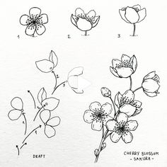 No photo description available. #bulletjournalmonthly Flower Drawing Tutorials, Flower Sketches, Art Tutorials, Art Sketches, Art Drawings, Tulip Drawing, Painting & Drawing, Black Tattoos, Owl Tattoos