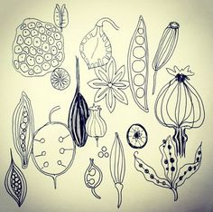 seed pod drawings 52 weeks of nature art
