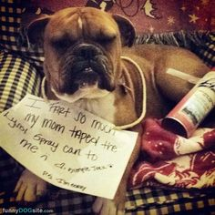 I Fart So Much - http://www.funnydogsite.com/pictures/I_Fart_So_Much.htm?utm_source=rss&utm_medium=Sendible&utm_campaign=RSS