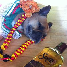 Pin for Later: 25 LOL-Worthy Dogs Dressed as Food Too Much Tequila