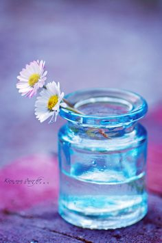 Dp For Whatsapp, Jpg, Flowers Nature, Summertime, Mason Jars, Flora, Daisy, Wallpaper, Creative