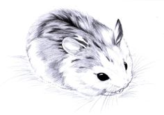 roborovski drawings | just too cute by aconite pawlove traditional art drawings animals 2010 ...