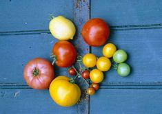 Heirloom Tomato Varieties - excerpt from Heirloom Vegetable Gardening by William Woys Weaver