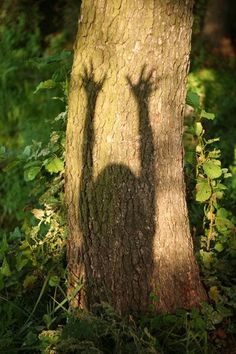 Mother Nature apparently has a shadow ( unfortunately there is a shadow on the X Ray that is unfortunately a malignant tumour ( THAT TUMOUR is HUMAN species that kills Earth day by day ) Ombres Portées, 4 Elements, Deep Books, Natsume Yuujinchou, Three Rivers, Foto Art, Light And Shadow, Belle Photo, Faeries