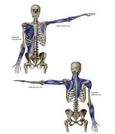 Anatomy trains - deep and superficial arm lines