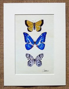 Butterfly Picture  Butterflies Print  Unframed Butterfly Print - Clouded Yellow, Amazon Blue & Wood Nymph Butterflies. A  lovely gift choice by Canvasbutterfly on Etsy