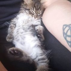 Now he has someone to cuddle with forever!
