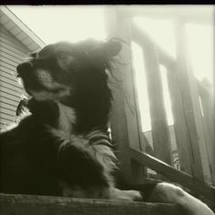 LuLu. A dog meant for me (Border Collie mix)...