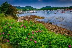 """Land and Sea"" - Southwest Harbor, Maine"