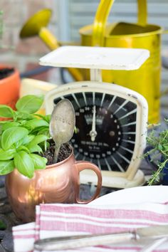 Take inspiration from containers you already own to create a beautiful herb garden for indoors or out. It's perfect for a small space!