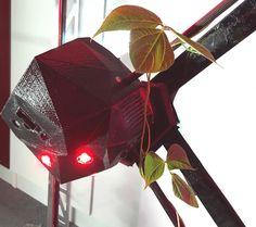 EU Project Developing Symbiotic Robot-Plant Biohybrids