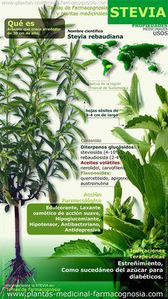 Infografía. Resumen de las características generales de la planta de Stevia. Propiedades, beneficios y usos medicinales más comunes de la Estevia (stevia rebaudiana). http://www.plantas-medicinal-farmacognosia.com/productos-naturales/stevia-rebaudiana-estevia/estevia-propiedades-y-beneficios/