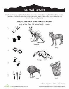 ACTIVITE - Relier les traces des animaux d'Australie