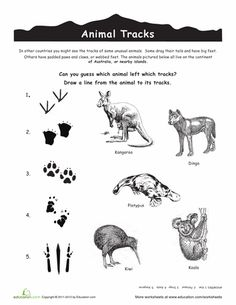 essay about australian animals Helpful tips and simple rules to learn on how to stay clear of dangerous animals in australia and fully enjoy travelling around australia simple & smart travel planning.