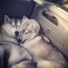 Cuddling for a snooze on the long roadtrip.
