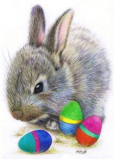 Kijk eens goed naar de haren van de konijnenvacht! Getekend met kleurpotloden!!! Karen Hull COLORED PENCIL