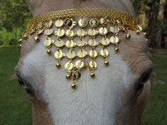 Coins Browband for Horse or Draft in Gold or por MyBuddyBling