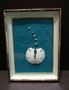 Vintage Framed Sand Dollar Art  Displayed in a 8 x 6 frame - Easel back on the frame has broken but the top of the frame has a custom sawtooth edge for wall hanging ________________________  Welcome to Love Bizarre Oddities! We specialize in oddities, taxidermy and antiques.  We collect, create and sell oddities, taxidermy and antiques. Please take notice that a decent portion of our inventory are antiques and nothing will be of best condition. We will try our best to describe the condition…