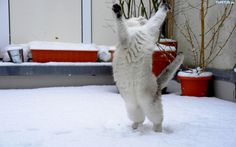 Śmieszne koty: grudzień 2013