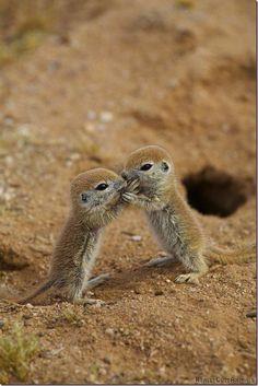 http://www.demotivateur.fr/article-buzz/les-animaux-les-plus-mignons-du-monde-183