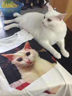 My Cat 05