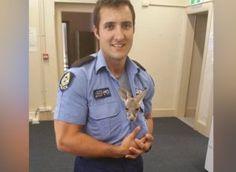 Bebe Kangourou adopté par un policier australien après la mort de sa mère heurtée par un camion