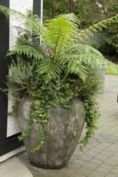 Or some lush ferns --several in a row? --in nice tall pots