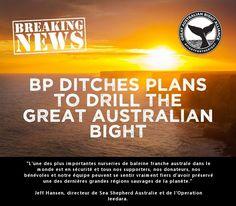 #Victoire pour les #baleines! Le géant BP abandonne ses plans de forage de la Grande Baie #Australienne :) Bravo à tous #SeaShepherd #OpJeedara  SANSGLUTEN_VG BREST (@Mj0glutenVG) | Twitter