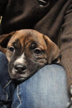 Little Boy waiting for his forever home at All Breed Rescue VT.  He's just a baby!