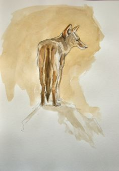 Coyote Watercolor Painting